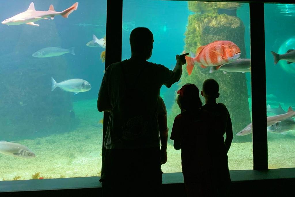 acuario de o grove